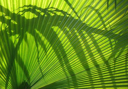 Palm Series III by Rosie Brown