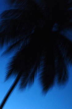Palm Silhouette  by Chase Chisholm