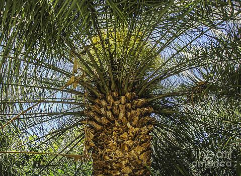 Dale Powell - Palm Sky