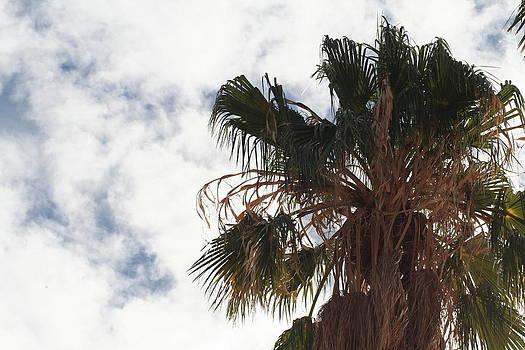 Palm Sky by David S Reynolds