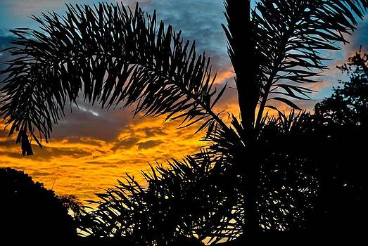 Palm Sunrise by Ken Rutledge