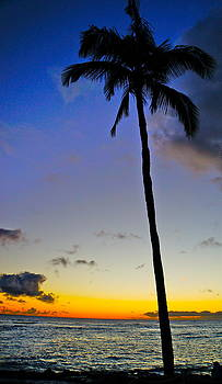 Tracey McQuain - Palm Sunset