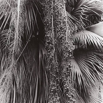 Palm by Susan Smith Evans