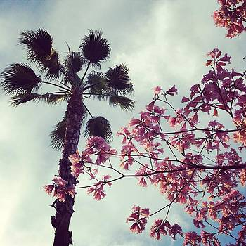 Palm Tree and Spring Flowers by Ann Marie Donahue