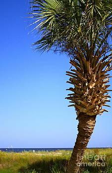 Danielle Groenen - Palm Tree Beneath a Blue Sky