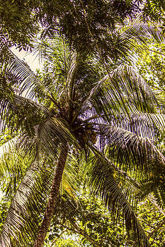 Palm Tree Breeze by Melanie Lankford Photography
