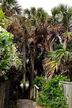 Palm Tree Path by Enid Gough