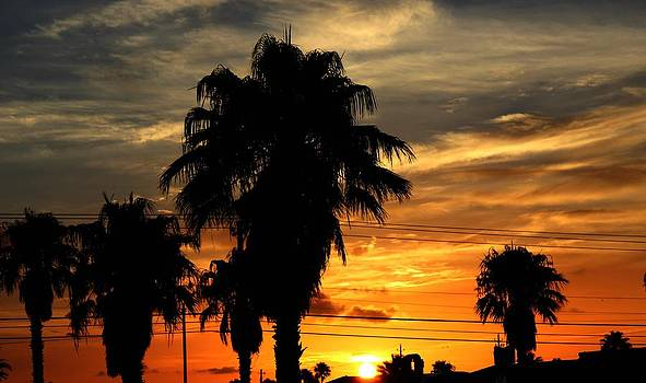 Palm Tree Silhouette by Candice Trimble