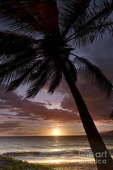 Palm Tree Sunset Maui Hawaii by Dustin K Ryan
