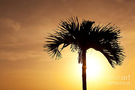 Palm Tree Sunset by Sharon Dominick