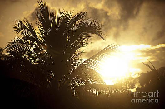 Tim Hester - Palm Tree Sunset