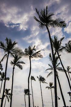 Palm Trees by Brandon McClintock