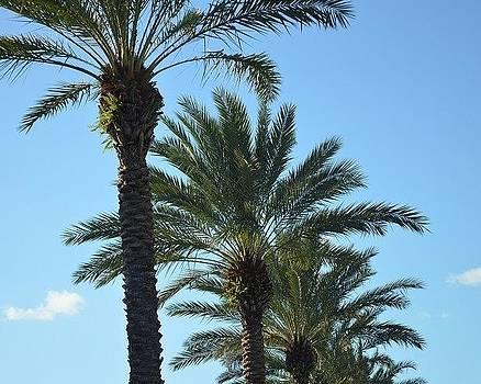 Palm Trees by Diana Berkofsky