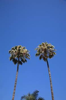 Frank Romeo - Palm Trees