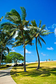 Palm Trees in the Park by Matt Radcliffe