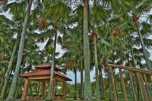 Palm Trees by Mario Legaspi
