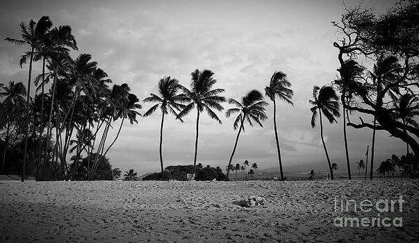 Edward Fielding - Palm Trees Maui Hawaii