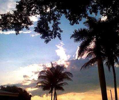 Palm Trees Oakland Park FL by Sierra Andrews