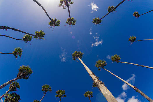 Palm Trees by Peter Verdnik