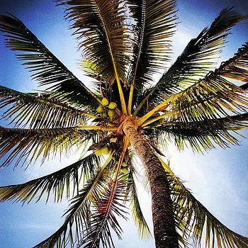 Palm Up by Cody Dill