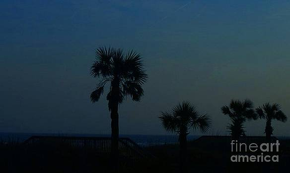 Palmetto Trees by the Dunes by Adam Dowling