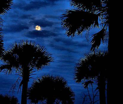 Matthew Winn - Palmettos in the Moonlight