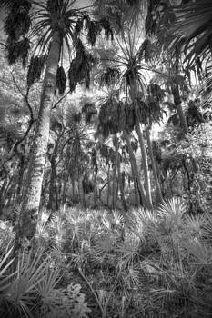 Palms And Palms by Bradley R Youngberg