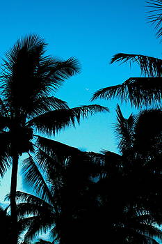 Palms at dusk with sliver of moon by Lehua Pekelo-Stearns