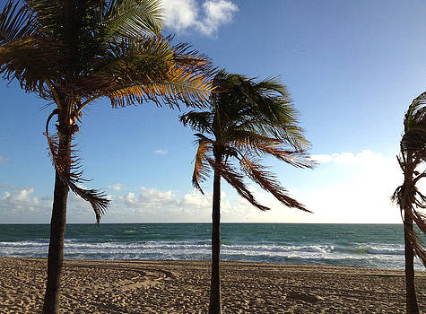 Palms at Ft Lauderdale Beach by Rosie Brown