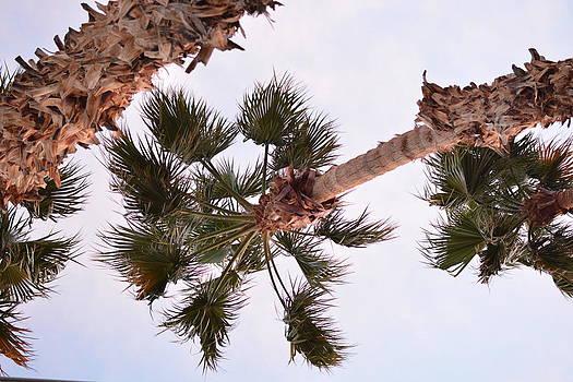Palms by Emily Smith