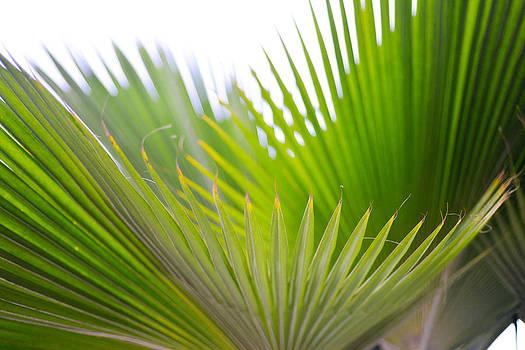 Ronda Broatch - Palms II