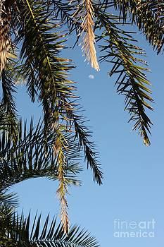 Palms in the Wind by AR Annahita