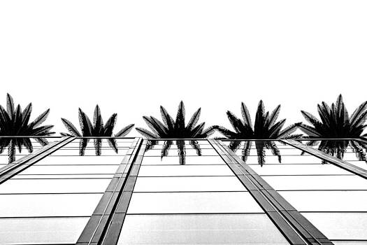Palms by Tammy Espino