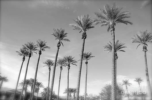 Palms by Tina Hannaford