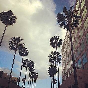 #palmtrees  #clouds #buildings by Ann Marie Donahue