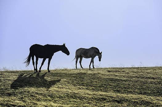 Palouse Horses by Thomas Chamberlin