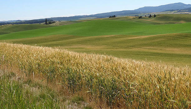 Palouse or Tuscany by Anne Mott