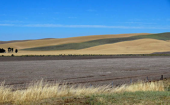 Palouse patchwork 1 by Anne Mott