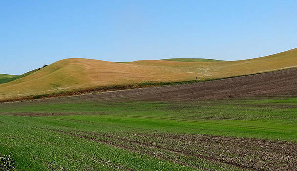 Palouse patchwork 2 by Anne Mott