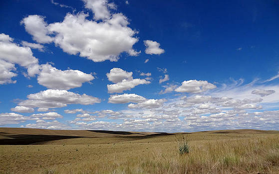 Palouse skies by Anne Mott