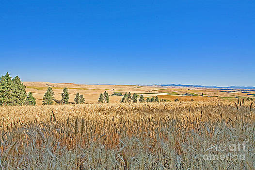 Palouse wheatfield by Russell Christie