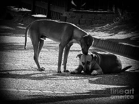 Pals - Street Dogs Of Didim Turkey by J J  Everson