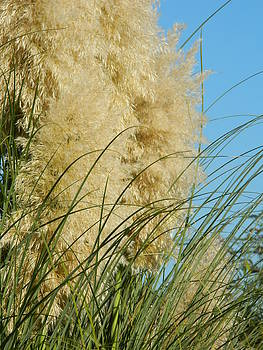 Nicki Bennett - Pampas Grass
