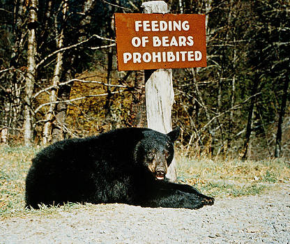 Panhandler Black Bear by Mary Elizabeth White