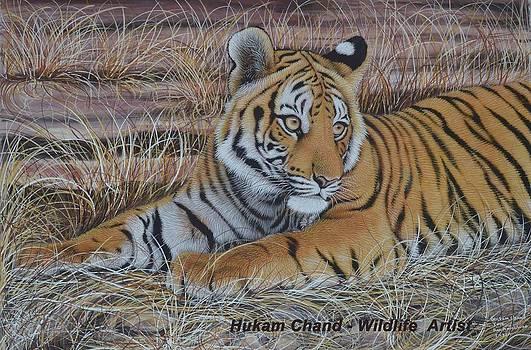 Panjo Tiger  by Hukam Chand Wildlife artist