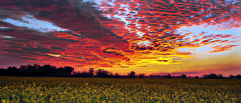 Pano Sunset Canola by Helen Akerstrom Photography
