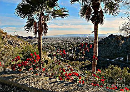 Panorama of Phoenix by Michaline  Bak