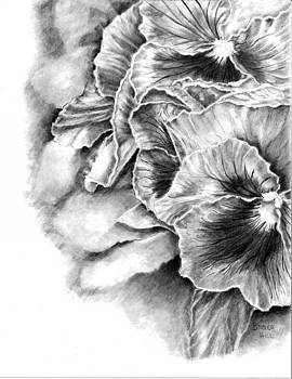 Pansies and Petals by Brenda Hill