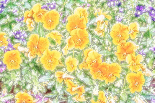 Pansies by Photographic Art by Russel Ray Photos