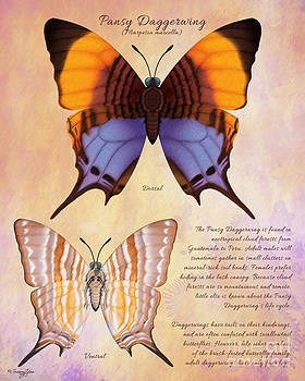 Pansy Daggerwing Butterfly by Tammy Yee